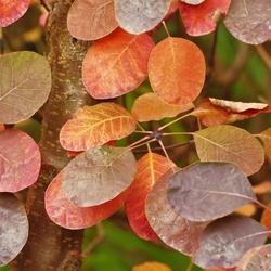 Trosje herfstbladeren