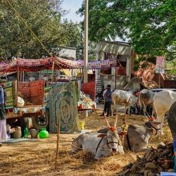 Dorpje in Zuid India