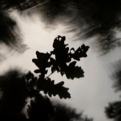 Reflectie in een eikenbos