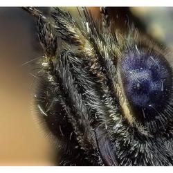 oog van vlinder