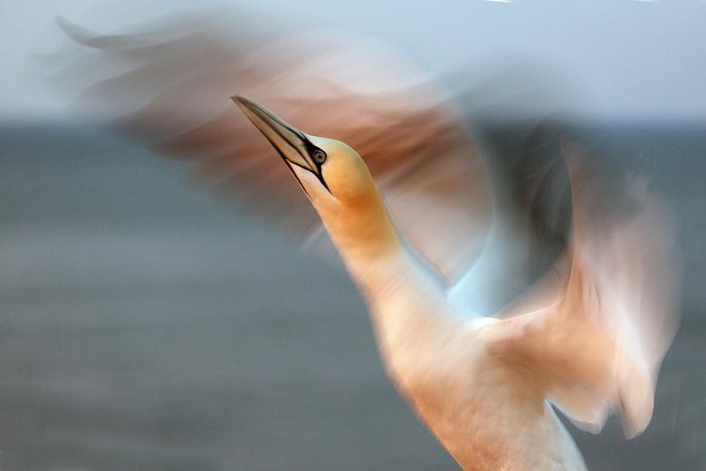Jan van Gent - Vroeg in de ochtend weer tijd om je vleugels uit te slaan.