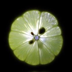 Lemon-Light