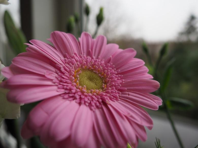 Een bloem in het raamkozijn