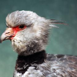 Vogel zonder naam..