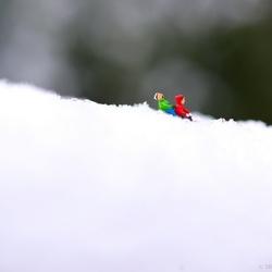 Bo and Luke Teenyweenie having fun in the snow