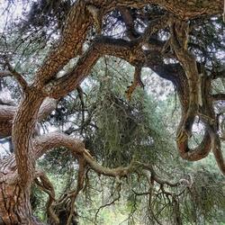 De oude grove den