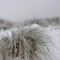 Sneeuw, mist en duinen.