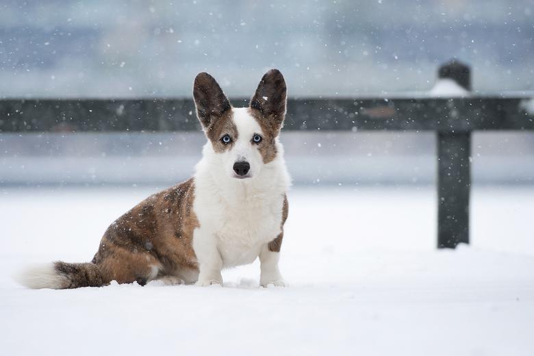 snow queen... -