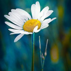 Lovely little flower