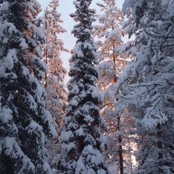 Lichtval op bomen