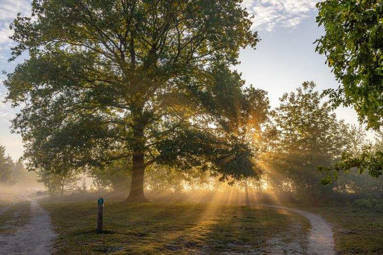 zonneharpen bij het Kootwijkerzand - Zonneharpen bij het Kootwijkerzand
