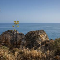 Cliffs' Edge