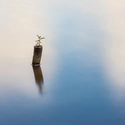 Palntje op stok in meer