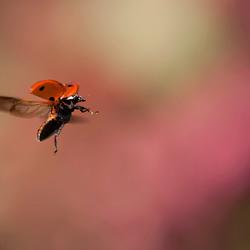 It's a Ladybird
