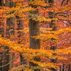 Afscheid van de herfst...