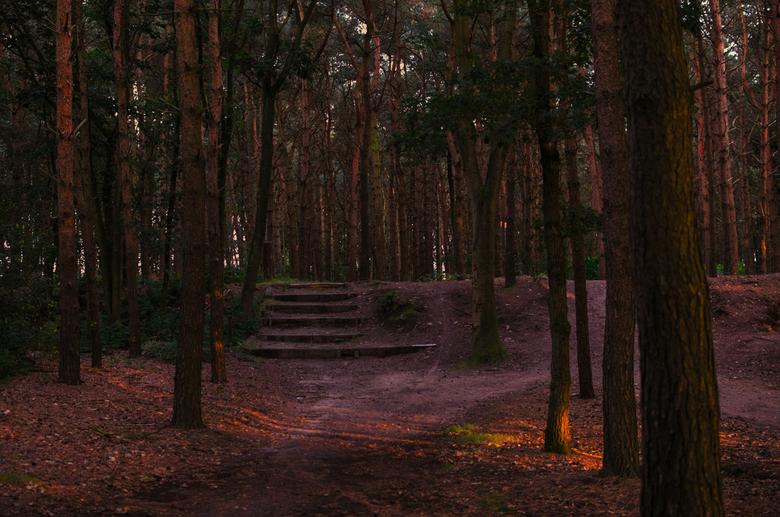 Can you see the light(jeff Healey) - De bossen zijn toch zo mooi in Nederland maar ik volgde niet het licht of de trap maar ging weer zuidwaarts naar