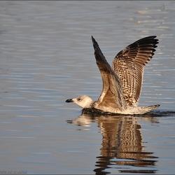 Landing in het water