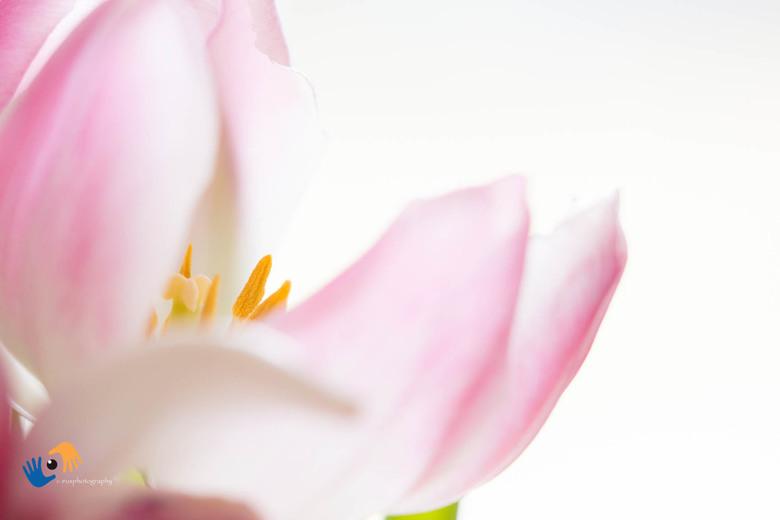 fris lentelicht - Binnenshuis deze close-up gemaakt met de Olympus 40-150mm op f/2.8. Het fijne van deze lens is dat je dicht bij het onderwerp kunt k