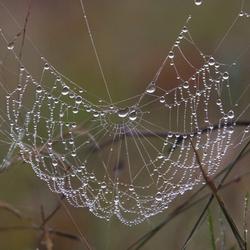 Bedauwde spinneweb