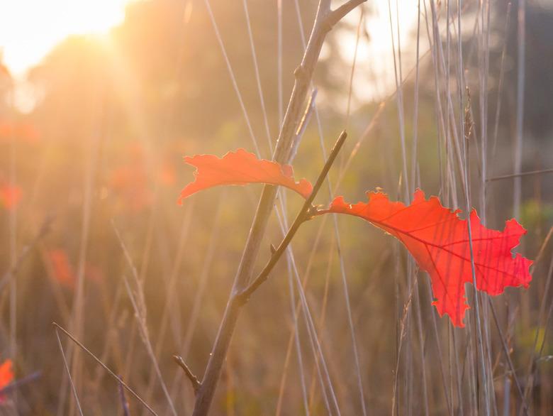 Herfstbladeren - Mooie herfstbladeren letterlijk in het zonnetje gezet op De Maashorst in Uden.