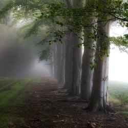 Een bos vol mist.