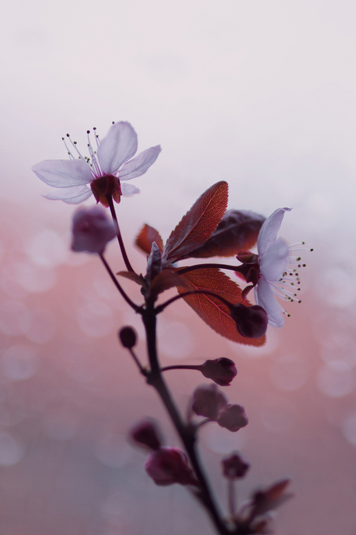 In bloei