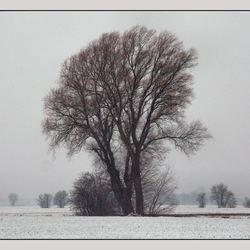 Sneeuw in Loppersum