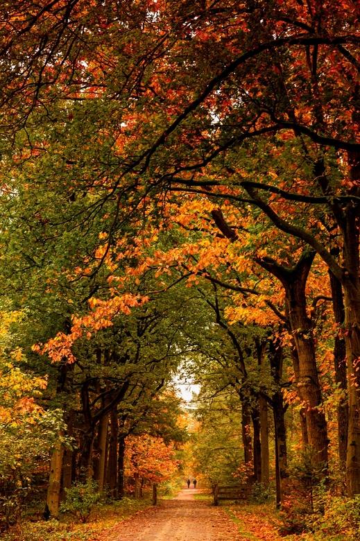 Kleur explosie - Wat heerlijk om in deze tijd in een bos te lopen die zoveel verschillende soorten bomen heeft en die dus zoveel mooie herfstkleuren g