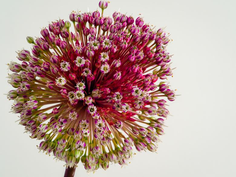 Kleurrijk - Soms zitten er in een bos zulke fijne, fotogenieke bloemen....