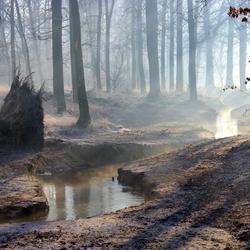 Wintermorgen nabij Oisterwijk