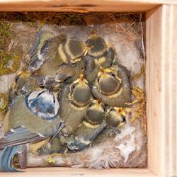 Samen in het nest