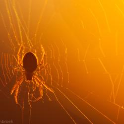 Spin tijdens zonsondergang