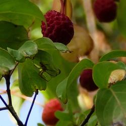 spinnetje tussen herfstkleuren