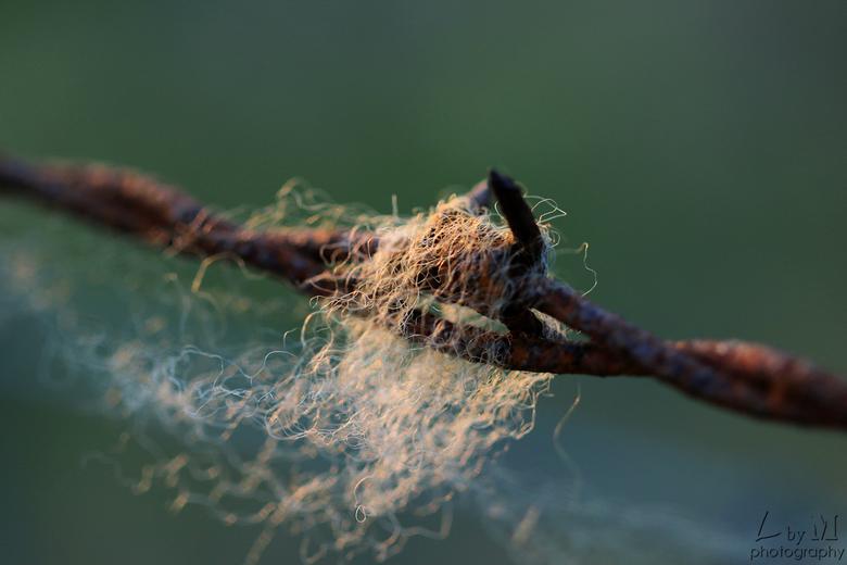 Hairy barbwire - Detail prikkeldraad.