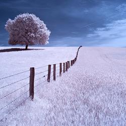 Surrealistisch landschap