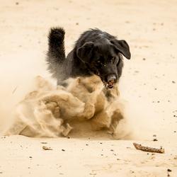 My doggie...