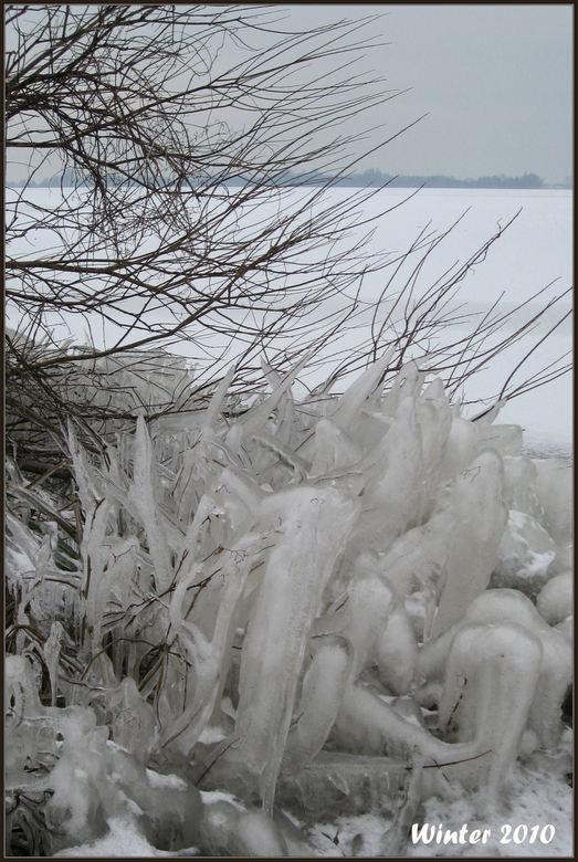 Winter 2010 - Langs het water van de Westeinderplassen is het water bevroren op de planten. Hetgeen een prachtig gezicht opleverd.