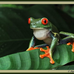 Beauty uit Costa Rica