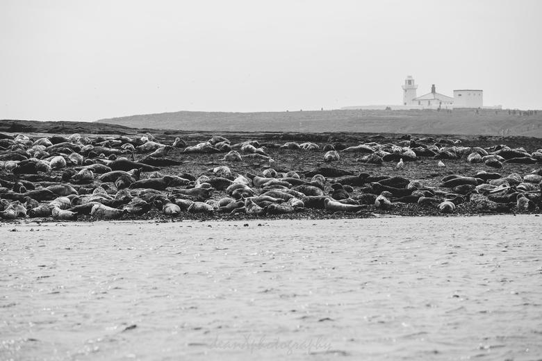 Seal Island - Een eiland vol met zeeleeuwen.