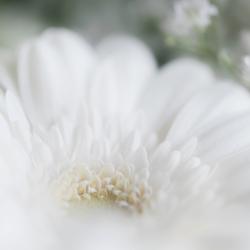mooi wit is niet lelijk!