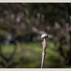 Lente in de Japanse tuin 4