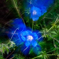 Bewegende bloemen