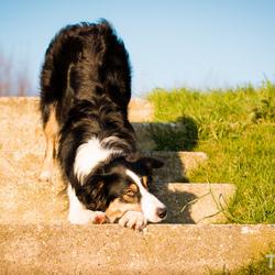 Jindi op de trap