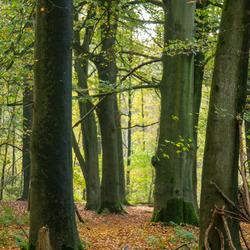 Het bos om de hoek