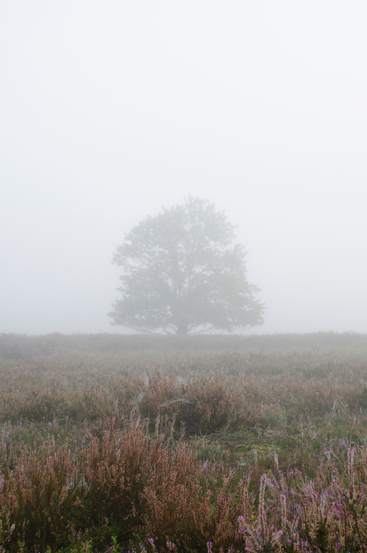 """Misty moorland - Misty morning <img  src=""""/images/smileys/smile.png""""/>"""