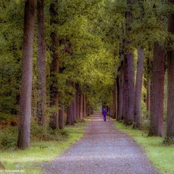 Wandeling in het Peerdsbos