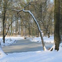 Het Liesbos in de sneeuw