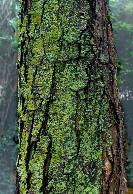 "oude boom - BBB (Bomen Beter Bekeken) <img  src=""/images/smileys/smile.png""/>."
