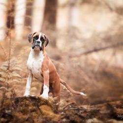 puppy in het bos