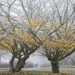 Herfst-winter en mist 2-12-2017